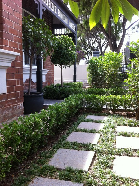 buxus and dwarf mondo grass